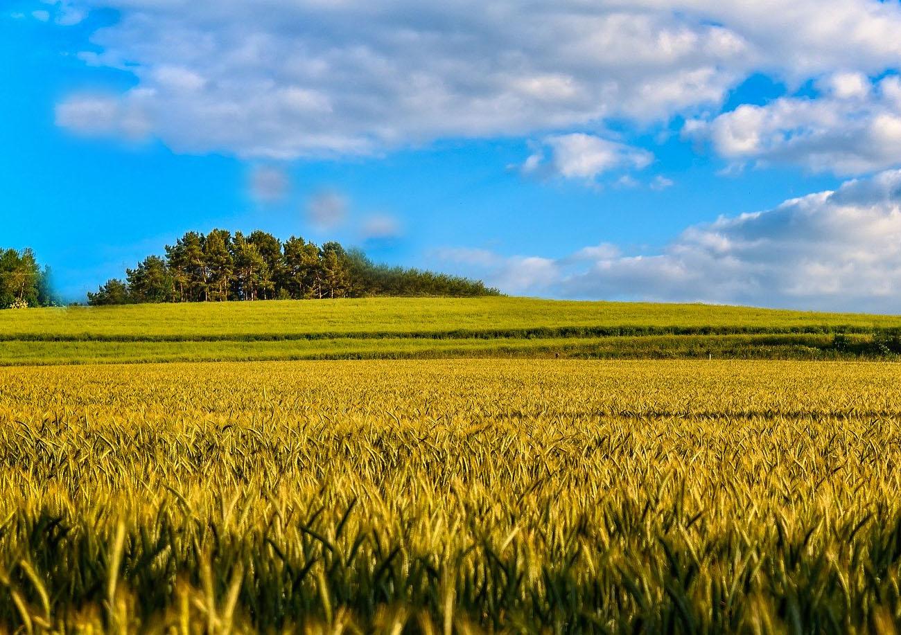 Відкриття ринку землі: сумнівний юридичний акт з незрозумілим  ефектом