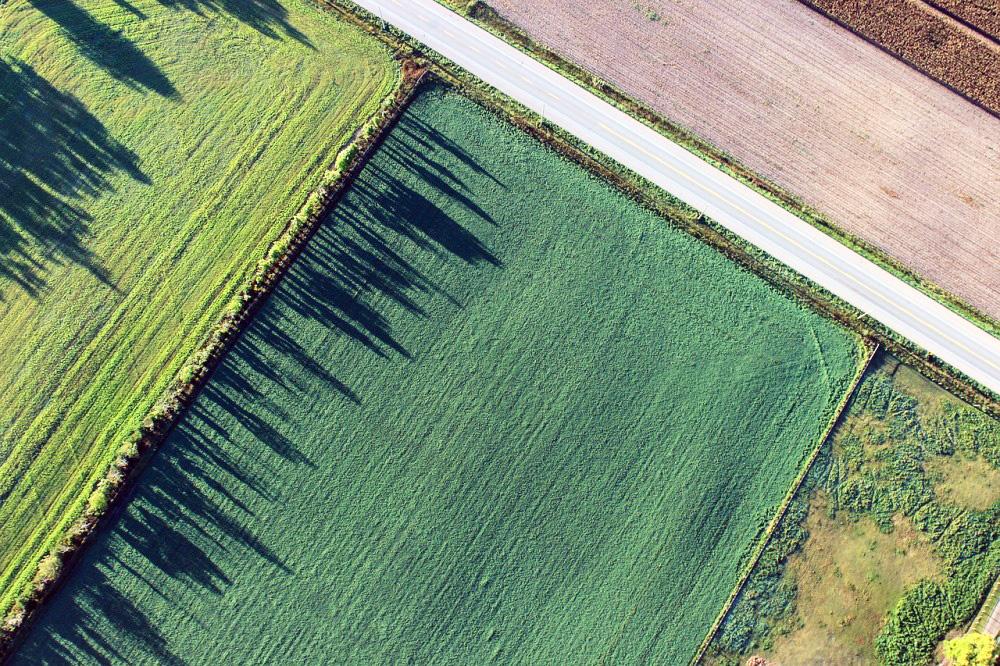 Безкоштовні гектари: дилема синиці і журавля